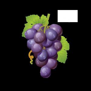 Sabadie Rouge Vin de France – BIB